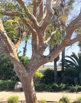 Tree along the walking path